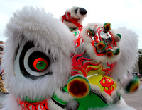 January 23, 2012  365 year of the dragon